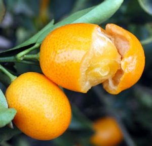 Kumquat-Cut-fruit